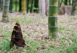 天気が良いので、竹をNOKOします。