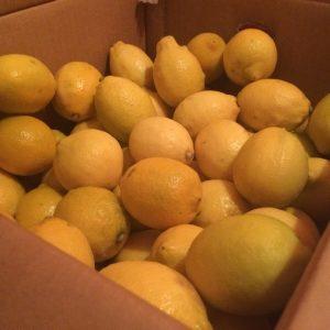 最強レモンサワー始めました。